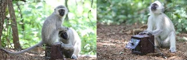 Grands singes, petits singes Pr%C3%A4sentation1