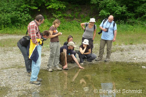 photo cours amphibiens - excursion