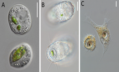 Fig5_algae_feeders_small-resize485x295.jpg