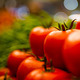 30nov2018_tomates185.jpg (tomato background)