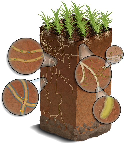 Soil_SFA_website_small.png
